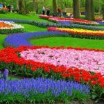Весеннее путешествие с ароматом тюльпанов